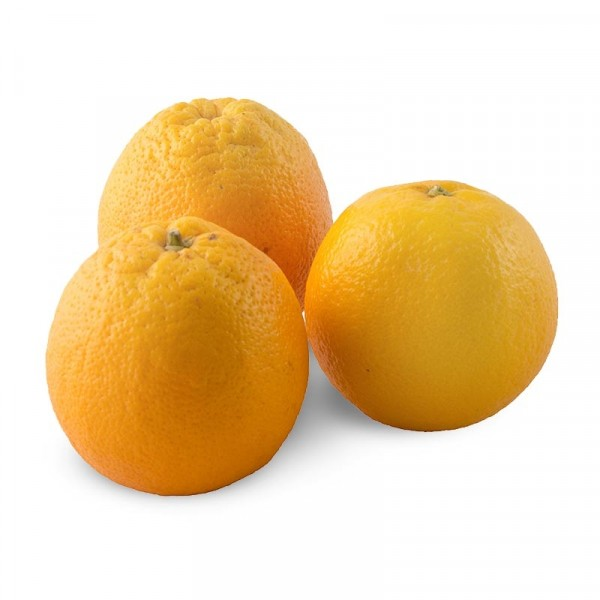 Apelsin 1x16kg Everfresh #20260
