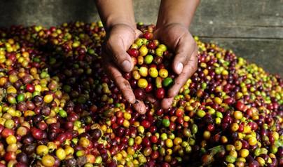 5 goda skäl att handla Fairtrade till ditt cafe